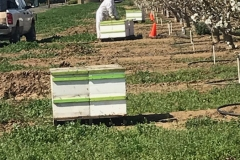 Beekeeper and bee boxes (hives)