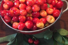 Rainier Cherries, washed and ready to eat!